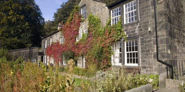 Back of Lumb Bank covered in Ivy